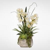 Real Touch White Cymbidium Orchids/Succulents in Concrete Pot