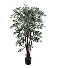 Silk Ruscus Tree (4 ft.)