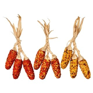 16 Inch Hanging Harvest Dried Corn 9PC Assortment