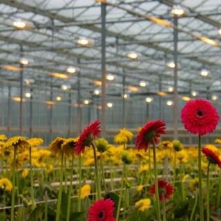 1000W Horticulture Indoor Gardening Sodium Grow Light Bulb Lamp