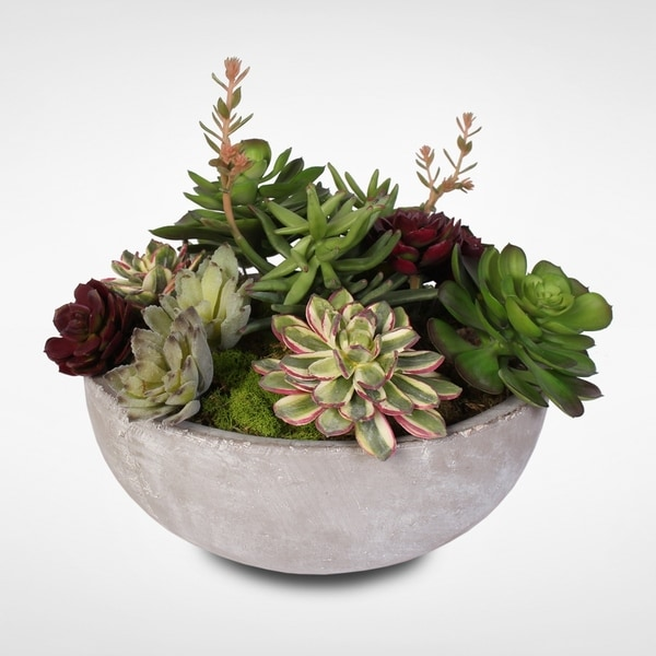 Artificial Succulent Variety in a Modern Cement Round Bowl