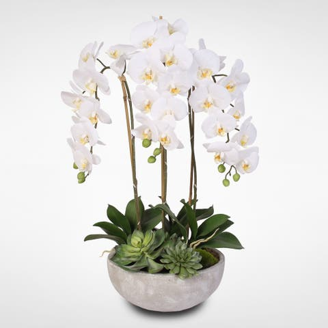 Silk White Phalaenopsis Orchids and Succulents in a Modern Stone Bowl