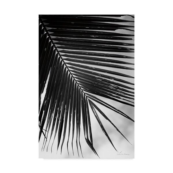 Debra Van Swearingen 'Palm Frond Ii' Canvas Art 36720565