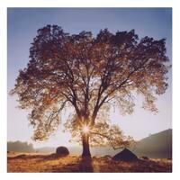 Black Oak Sunset Landscape Canvas Art - Blue