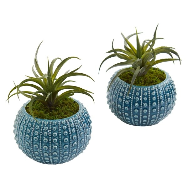 Air Plant Artificial Succulent in Blue Vase (Set of 2)