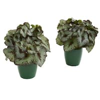 Rex Begonia Artificial Plant in Green Planter (Set of 2)