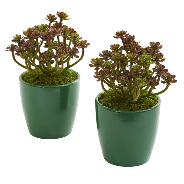 Sedum Artificial Plant in Green Planter (Set of 2)