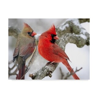 Clarence Stewart 'Cardinal Couple In Snow' Canvas Art - Black