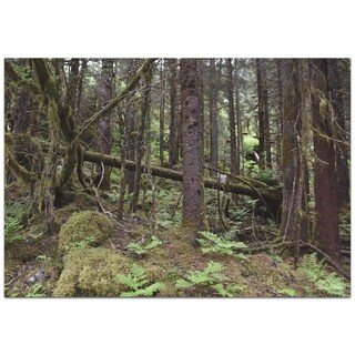 Gregory Phillips 'Forest Floor' 32in x 22in Landscape Photography