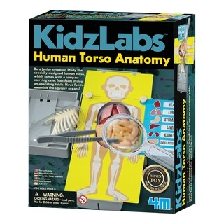 4M KidzLabs Human Torso Anatomy Science Learning Kit