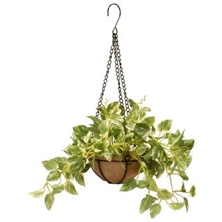 """Link to 9"""" Pothos Plant Hanging Basket Similar Items in Decorative Accessories"""