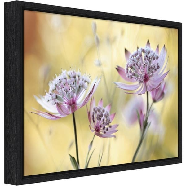 Canvas Art Framed Astrantia Major By Mandy Disher Overstock 22707978 Black