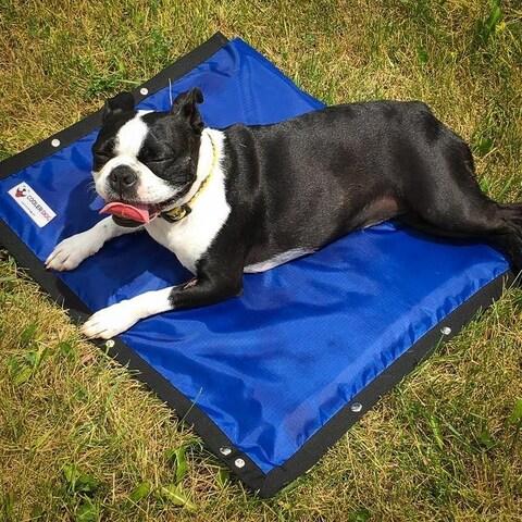 Cooler Dog Turbo Cooling Mat