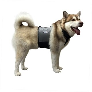 Cooler Dog Cooling Vest and Collar (Large)