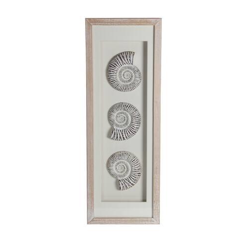 Snail Seashell Wood Shadow Box - Brown