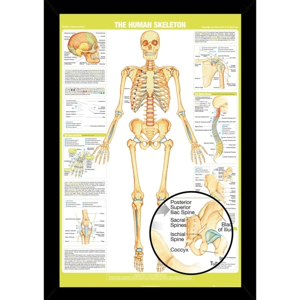 Shop Chartex Skeleton Details Poster With Choice of Frame (24x34 ...