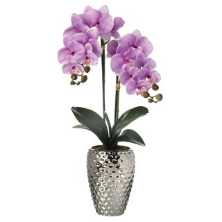 """Phalaenopsis Orchid In Hammer Silver Pot 24"""""""