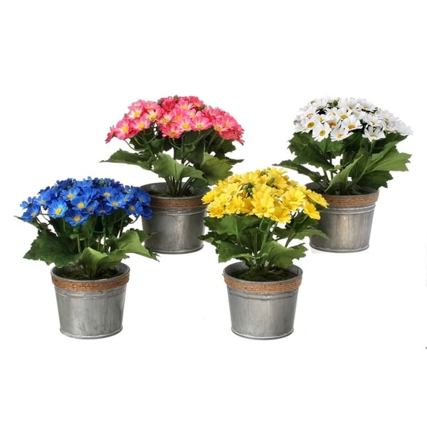 "Potted Sweet Daisy In Tin 9"" 4 Piece Set"