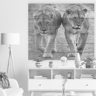 Designart 'Lions in Black and White' Animal Print on Natural Pine Wood