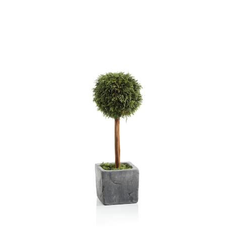 """15.75"""" Tall """"Cypress"""" Round Topiary, Green and Gray"""