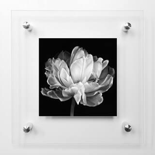 Tulipa Double Black and White II Acrylic Wall Art