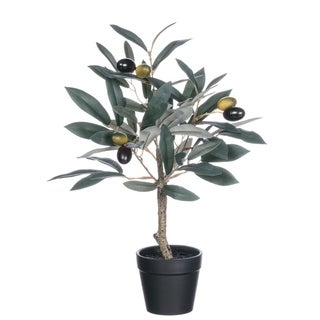 "Potted Olive Tree - green, brown, tan, black - 10""l x 10""w x 14""h"