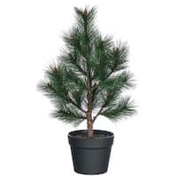 """Potted Pine Tree - 12""""l x 12""""w x 22""""h"""