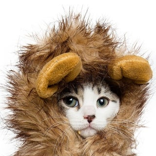 Cat or Small Dog Lion Mane Costume