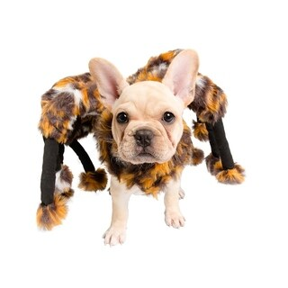 Cat or Small Dog Spider Costume