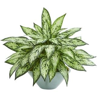 Silver Queen Artificial Plant in Green Vase