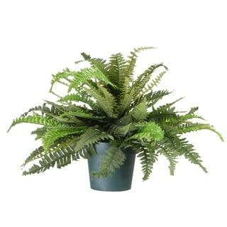 20-inch Green Fern Plant