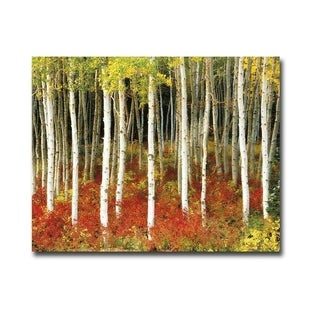 Aspen Grove by Scanlan Gallery Wrapped Canvas Giclee Art (24 in x 30 in, Ready to Hang)