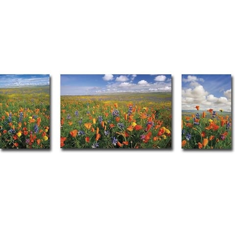 Flowers to the Horizon I, II, & III by Donald Paulson 3-piece Gallery Wrapped Canvas Giclee Art Set (Ready to Hang)