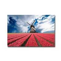Rows of Color 1 by Jim Zuckerman Gallery Wrapped Canvas Giclee Art (24 in x 36 in, Ready to Hang)