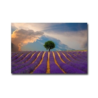 Lavender Field by Jim Zuckerman Gallery Wrapped Canvas Giclee Art (24 in x 36 in, Ready to Hang)