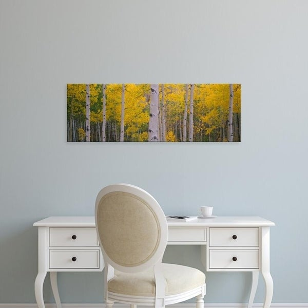 Easy Art Prints Panoramic Images's 'Aspen trees in a forest, Telluride, San Miguel County, Colorado, USA' Premium Canvas Art