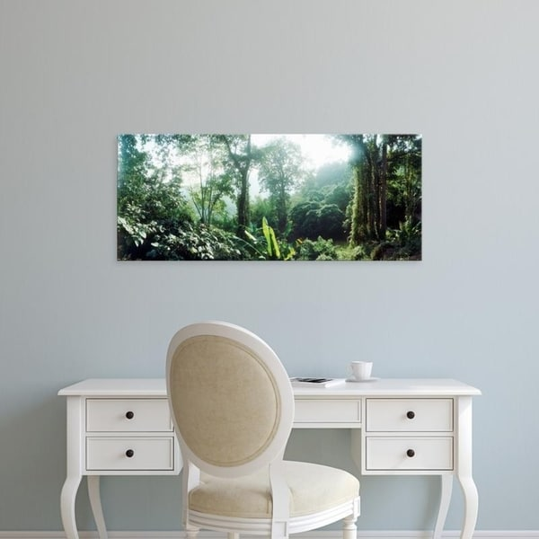 Easy Art Prints Panoramic Images's 'Vegetation in a forest, Chiang Mai Province, Thailand' Premium Canvas Art
