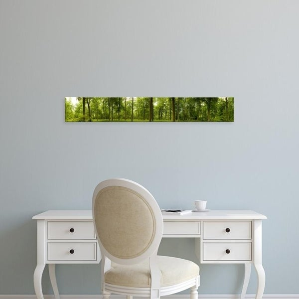 Easy Art Prints Panoramic Images's 'Spring in Thetford Forest, Norfolk, England' Premium Canvas Art
