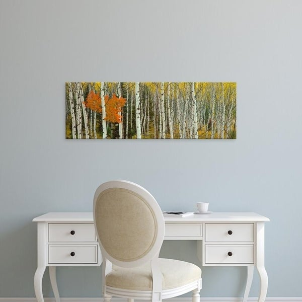 Easy Art Prints Panoramic Images's 'Aspen trees in a forest, Valley Trail, Grand Teton National Park, Wyoming' Canvas Art