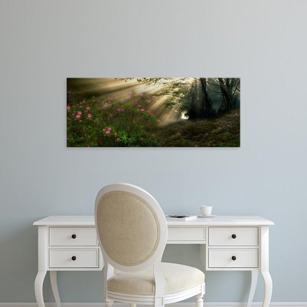 Easy Art Prints Panoramic Images's 'Sun shining through trees in a forest' Premium Canvas Art
