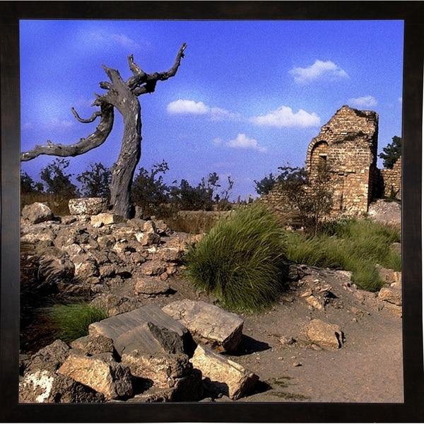 "Biblical Tree Of Caeserea2-HARLAN54466 Print 6""x6"" by Harold Silverman - Landscapes"