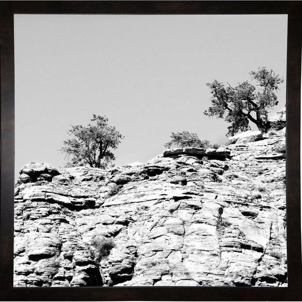 "Twin Tips Of Tree B/W-HARLAN78292 Print 20""x20"" by Harold Silverman - Landscapes"