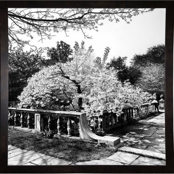 "Cherry Blossom Terrace-HARTRE68875 Print 20""x20"" by Harold Silverman - Trees & Old Fences"