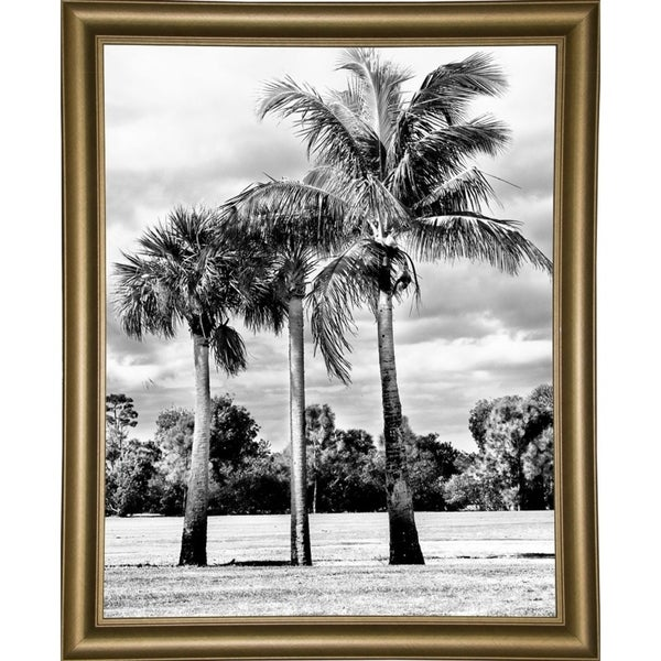 "3 Trees of Scenic Beauty-HARBEA96301 Print 20.25""x16"" by Harold Silverman - Beach, Palms & Lighthouses"
