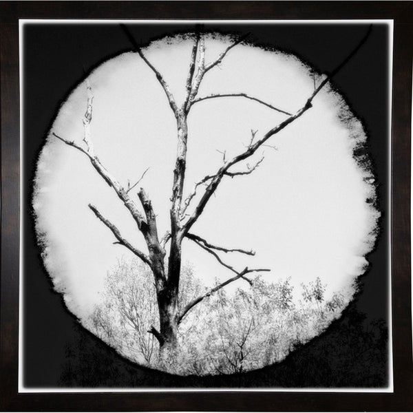 "Natures View B&W-HARTRE58992 Print 18.25""x18.25"" by Harold Silverman - Trees & Old Fences"
