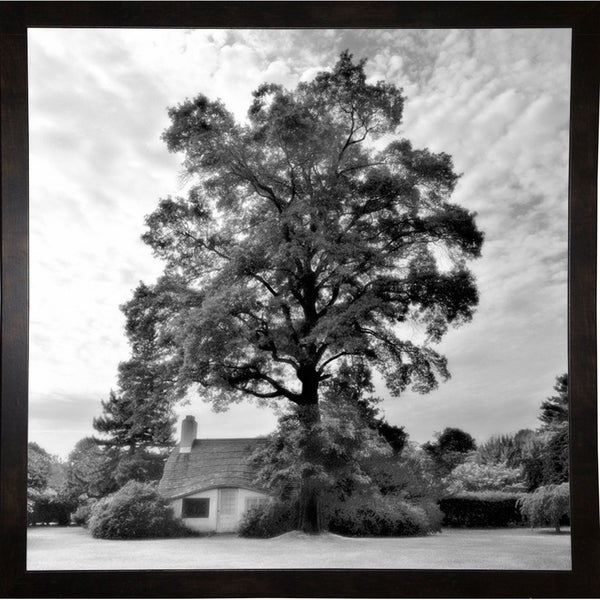 "Tree With House-HARTRE75635 Print 20""x20"" by Harold Silverman - Trees & Old Fences"