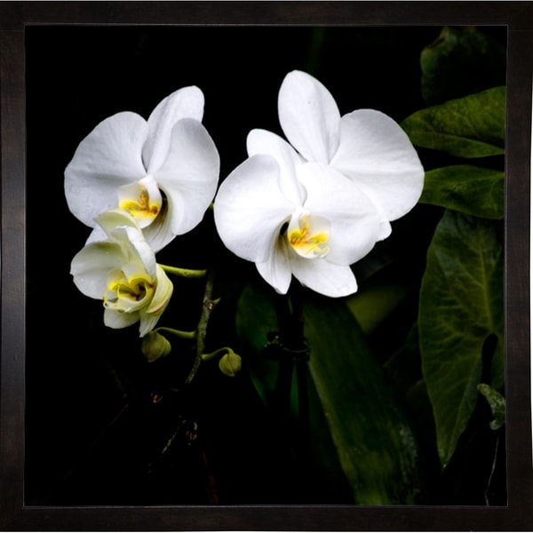 """Orchids And Leaves-HARFLO75410 Print 18""""x18"""" by Harold Silverman - Flowers"""