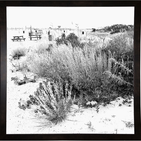 "Beach Foliage Soft Focus-HARBEA80578 Print 20""x20"" by Harold Silverman - Beach, Palms & Lighthouses"