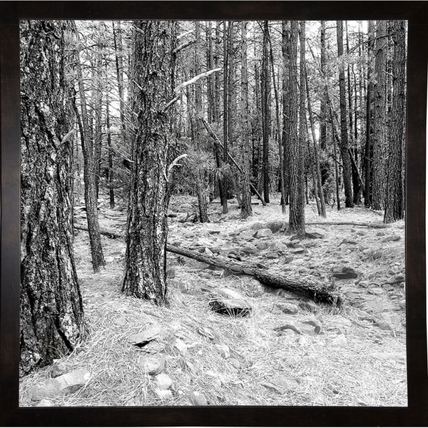 "Top Of The Mountain B & W-HARTRE78728 Print 20""x20"" by Harold Silverman - Trees & Old Fences"