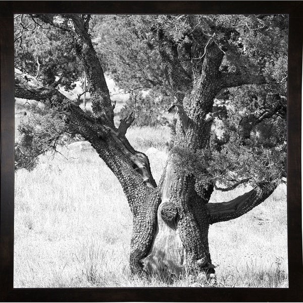 """Unique Tree At Mountain Top B&W-HARTRE78275 Print 20""""x20"""" by Harold Silverman - Trees & Old Fences"""